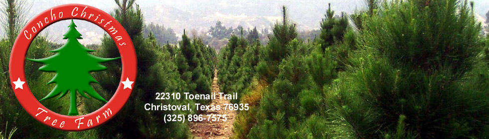 concho christmas tree farm christoval texas - Christmas Tree Farm Near Me